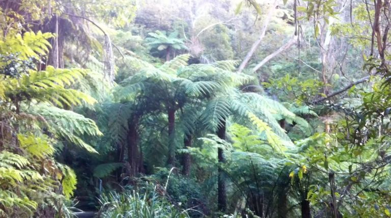 Blue Mountains Temperate Rainforest