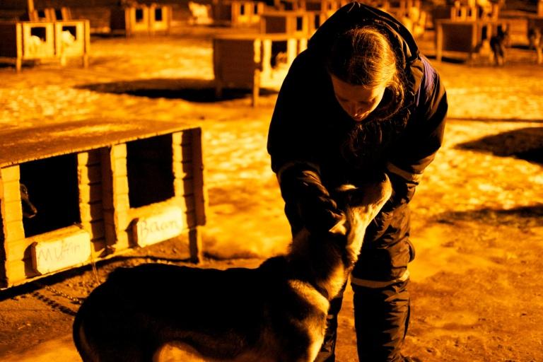 Alaskan Husky stroke
