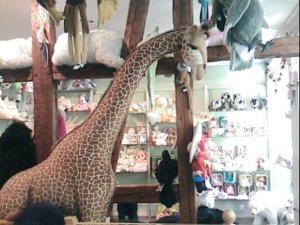 Lifesize cuddly giraffe
